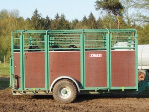 Transport Wasserbüffel Holstein