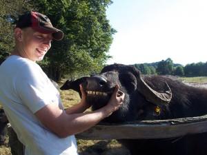 Büffel Norddeutschland Leezen Holstein Günther